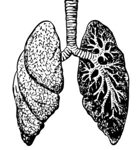 image of lungs